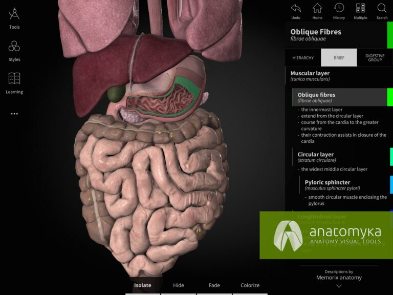 Anatomyka app - Digestive system