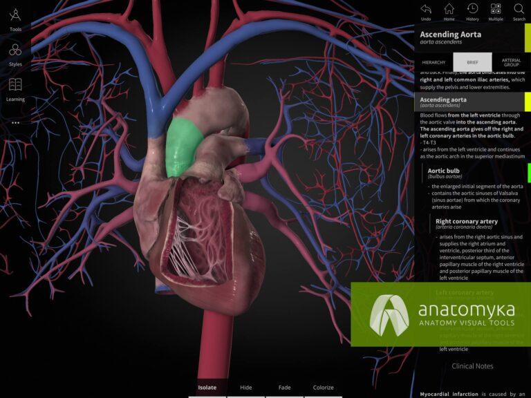 Anatomyka app - Human heart
