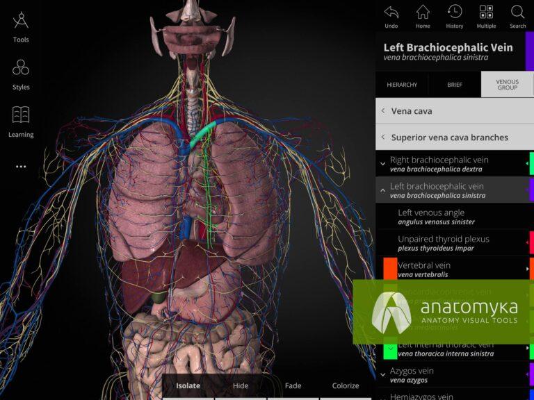 Anatomyka app - Circulatory system