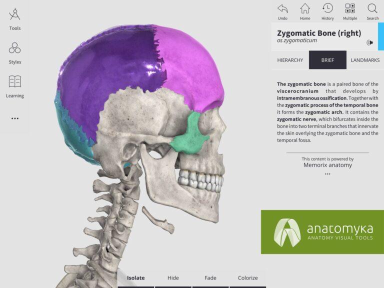 Anatomyka app - Colorize mode