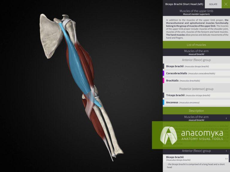 Anatomyka app - Learning mode
