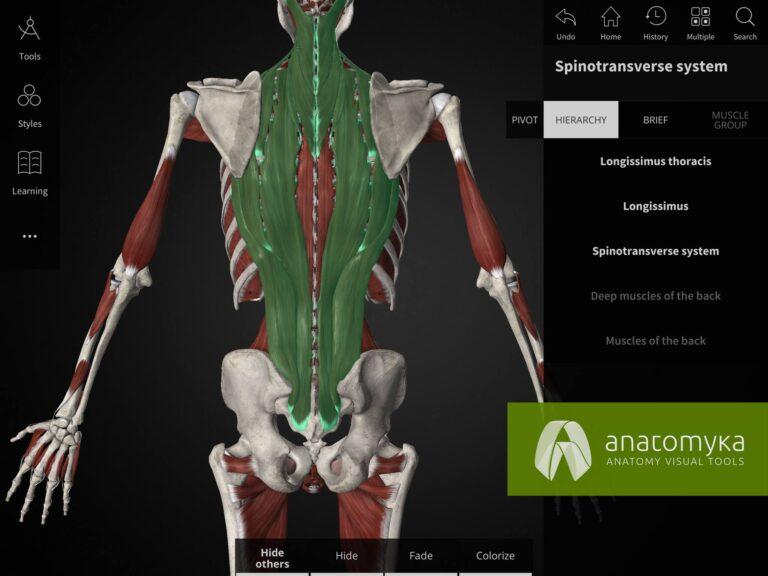 Anatomyka multiple selection